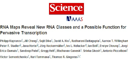 RNA Maps Reveal New RNA Classes and a Possible Function for Pervasive Transcription